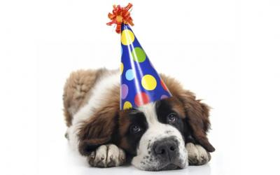 Træning og medicinsk behandling af hund i forbindelse med nytår