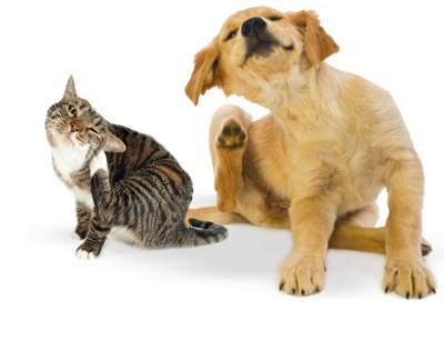 Lopper hos hunde og katte