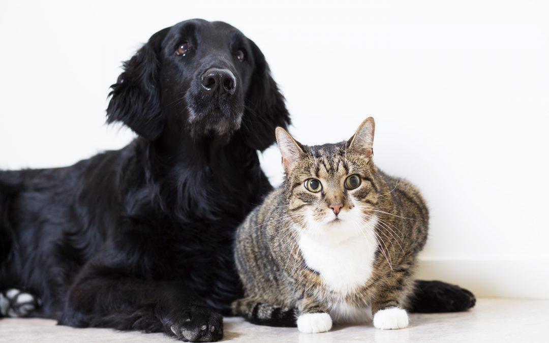 Har du hund eller kat, der lider af allergi?