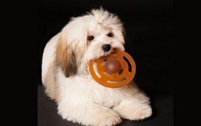 HEVEA Puppy Toys