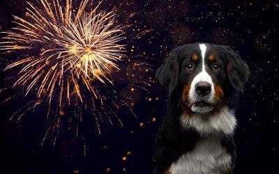10 gode råd, for at undgå en stresset hund nytårsaften