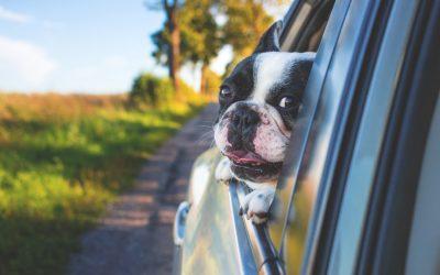 Bil Transport med Hunde