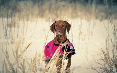 Kulden & mørket er kommet – Dette skal du være opmærksom på, som hundeejer!