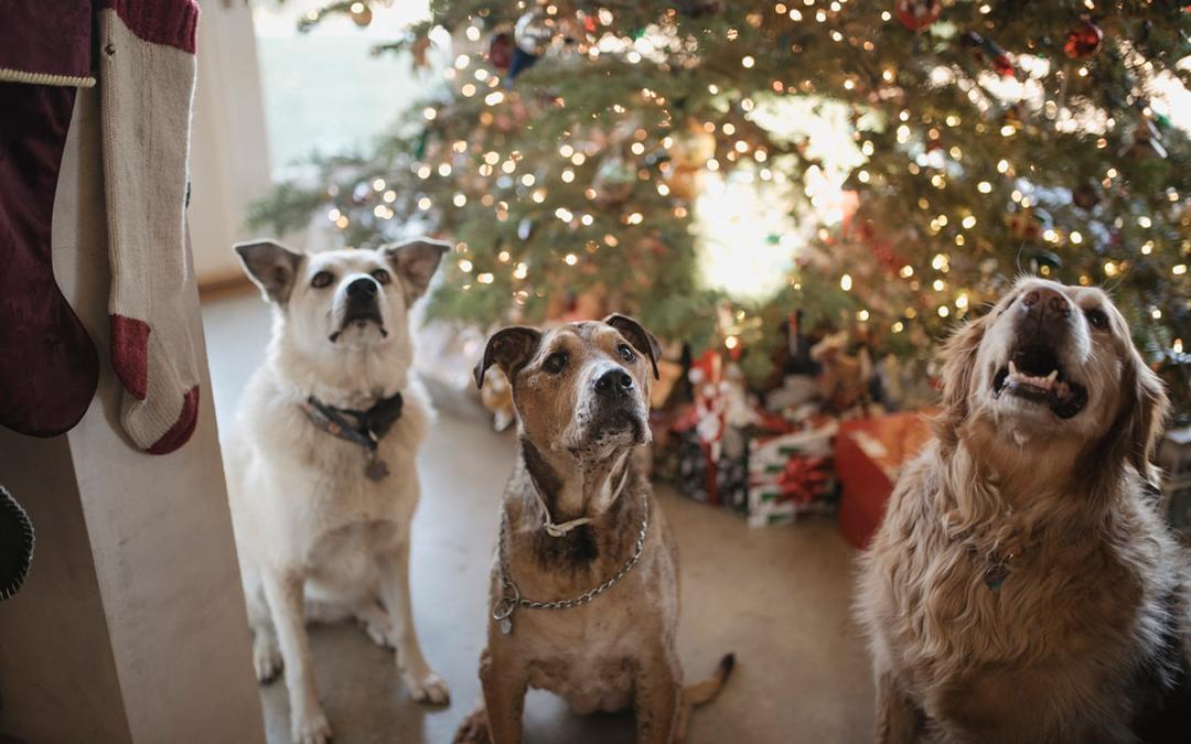 Må mit kæledyr få julemad, konfekt eller småkager?