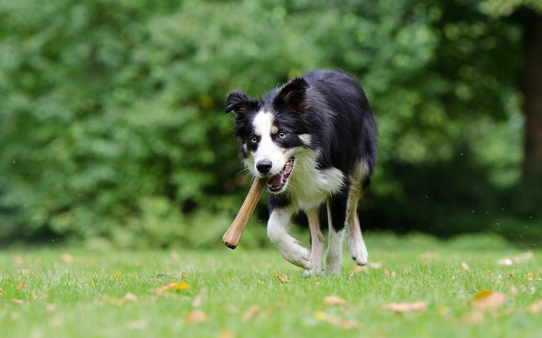Sådan får du din hund til at tabe sig på bedste vis!