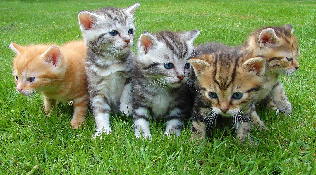 Ny kattekilling? Her får du dyrlægens gode råd til nye katteejere